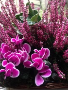 Julie's flowers